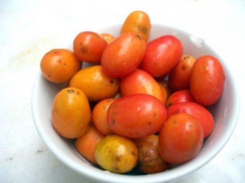 siriguela fruta
